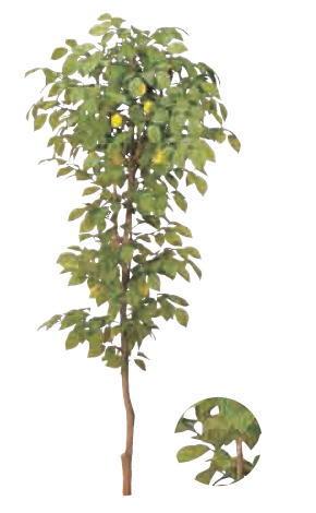 グローベン A70ND028A レモンツリー H1800 鉢付