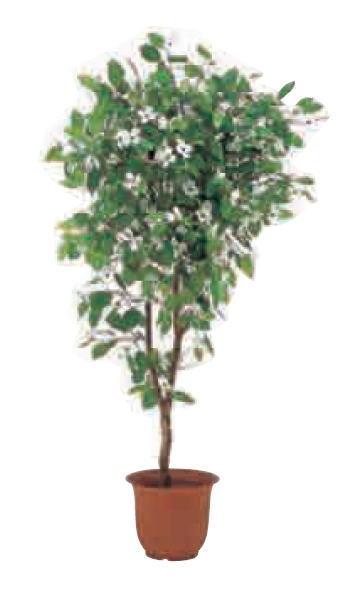 グローベン A70NT168A 花水木 H1800 鉢付
