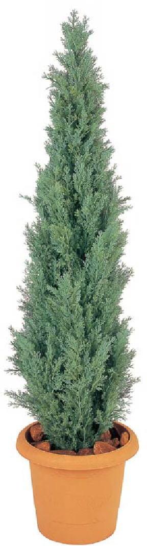 【超特価】 GD-105 タカショー ヒバツリー:家づくりと工具のお店 家ファン!-花・観葉植物