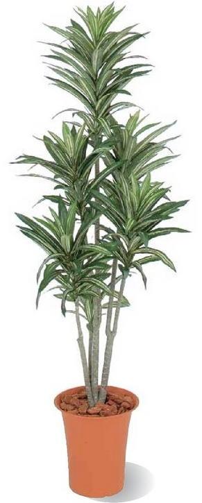 タカショー 観葉植物・グリーンデコ鉢付 ドラセナ 1.2m GD-187