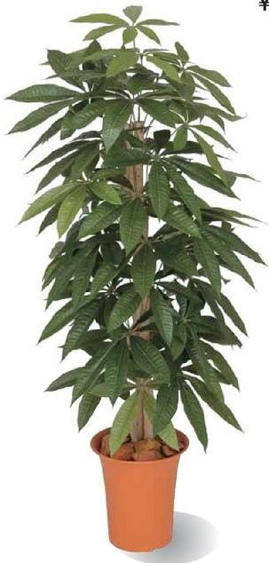 タカショー 観葉植物・グリーンデコ鉢付 パキラ 1.2m GD-166
