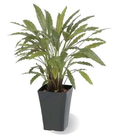 タカショー 観葉植物・グリーンデコ鉢付 カラテアG グリーン GD-164G お洒落でリアル