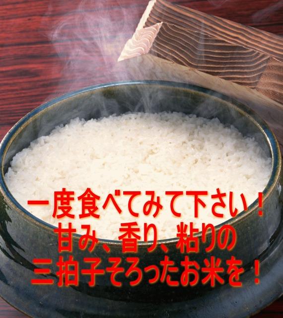 伊賀米コシヒカリ 平成30年産 玄米5kg  特Aランク 米ぬか無料 精米無料 白米 無洗米 3分づき 5分づき 7分づき 胚芽米 こしひかり