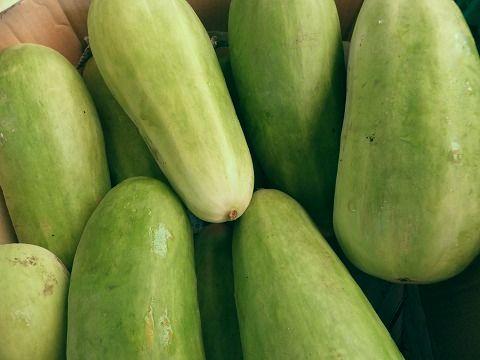 7月下旬より発送予定 国産品 寒暖差のある漬物の本場から 長野産 白瓜 1本-3本 白うり 約1k 休み