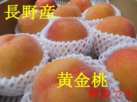 クール便 送料無料 数に限りがあります 8月半ばより発送 糖度12-14程度桃の味わいとマンゴのような味わいで 果肉は黄色です 長野産 約2kg 果物箱入り いよいよ人気ブランド 予約販売 5個~9個 黄金桃
