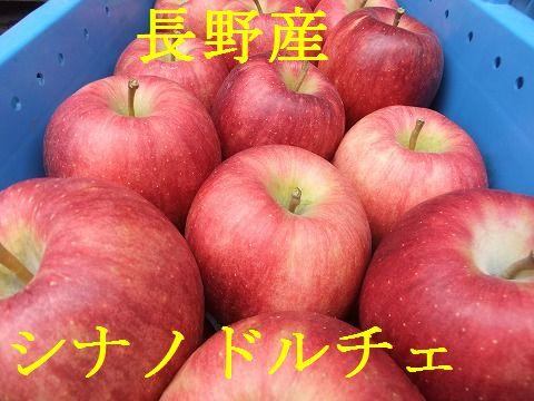 最新号掲載アイテム 高級リンゴです 予約特別価格 数量限定 売却 家庭用 大切な方へ シナノドルチェ 9月下旬ごろ発送予定 約5k