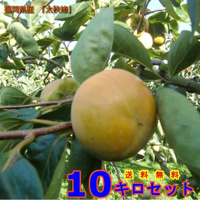 全てのアイテム 柿 カキ 福岡県うきは市浮羽町産 優良品  (太秋柿) Mサイズ 10Kg 果物, インポートアパレル専門店iDIRECT a5c80d95