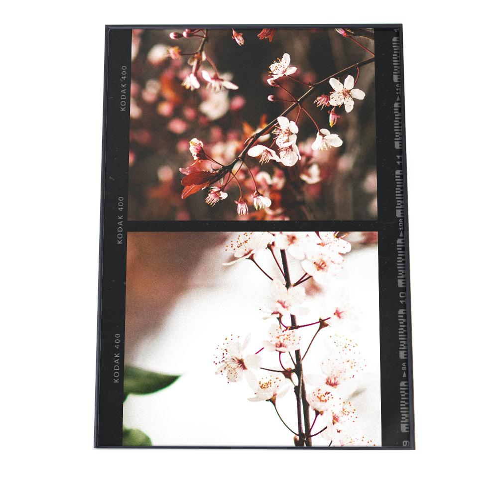 こちらのポスターはA2サイズです ポスター 贈答品 A2サイズ 約42x59cm 選べる用紙 大きさ インテリア おしゃれ ファッション 大きい フォト アート モダン シンプル ラッピング無料 カフェ風 ナチュラル 花 かわいい レトロ 季節 韓国 春 フィルム 日本 桜 北欧 さくら