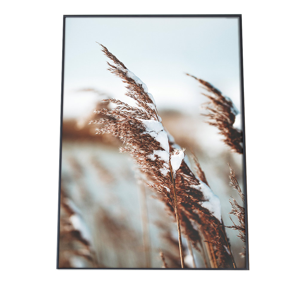 こちらのポスターはA2サイズです ポスター A2サイズ 約42x59cm 選べる用紙 大きさ インテリア おしゃれ 70%OFFアウトレット ファッション 大きい 韓国 ススキ リース パンパスグラス ナチュラル メーカー公式 雪 北欧 フォト クリスマス 写真 サーフ もみの木 アート 冬 植物 結晶