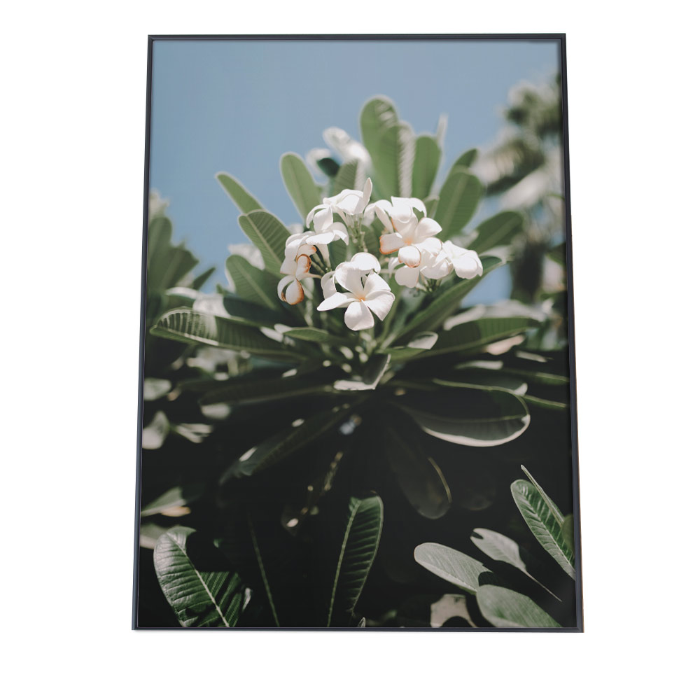海外並行輸入正規品 こちらのポスターはB2サイズです ポスター B2サイズ 約51x73cm 選べる用紙 大きさ インテリア オシャレ ファッション フォト モダン シンプル お洒落 韓国 ボタニカル 南国 西海岸 北欧 グリーン カリフォルニア 観葉植物 フラワー 花 ブルー 実物 おしゃれ