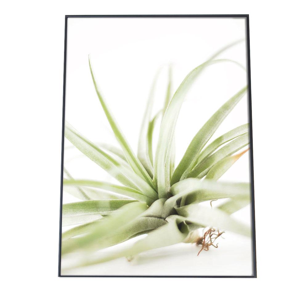 こちらのポスターはB2サイズです 低廉 ポスター B2サイズ 約51x73cm 選べる用紙 大きさ インテリア おしゃれ ファッション 植物 草 グリーン 緑 アーバンジャングル ボタニカル イオナンタ 買い物 木 観葉 チランジア エアプランツ