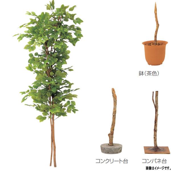 グローベン 人工植物 樹木・屋内用 ぶなの木 A70NC035 H1500mm
