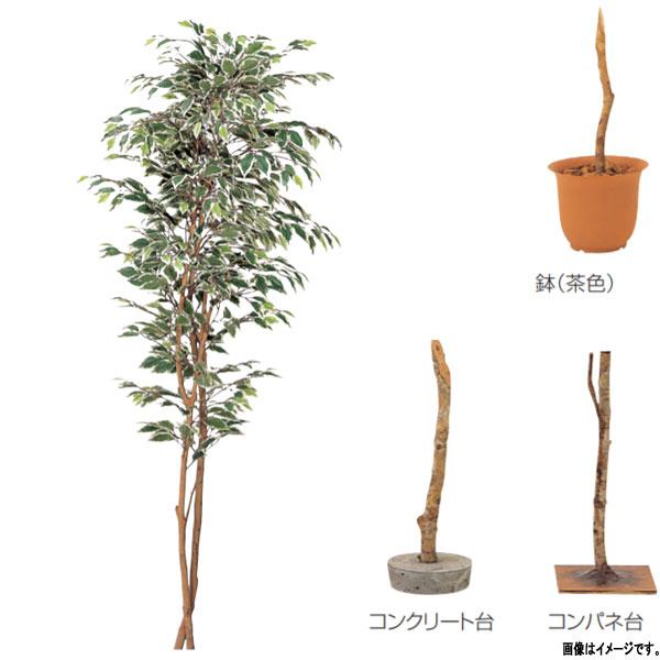 グローベン 人工植物 樹木・屋内用 ハワイアンフィカス A70ND065 H1500mm