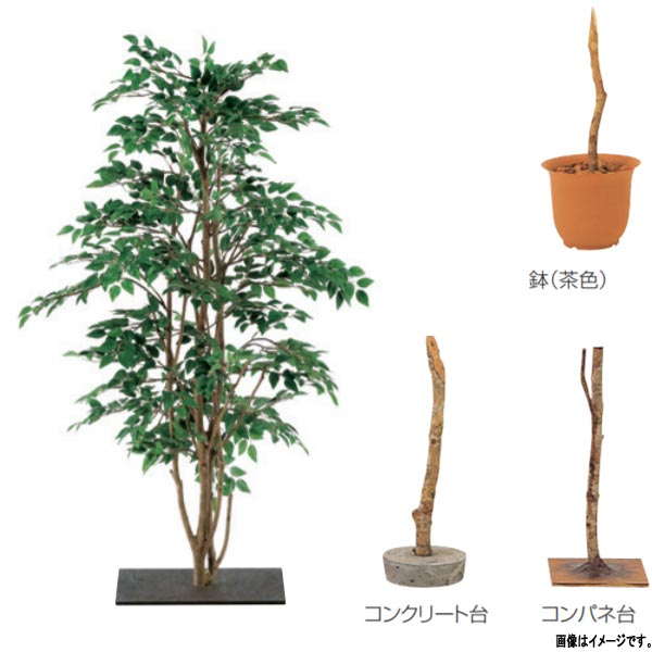 グローベン 人工植物 樹木・屋内用 ミニカメリア A70ND351 H1000mm