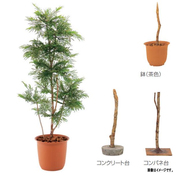 グローベン 人工植物 樹木・屋内用 エバーフレッシュ A70ND515 H1500mm