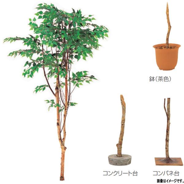グローベン 人工植物 樹木・屋内用 白樺(1本立) A70NS865 H1500mm