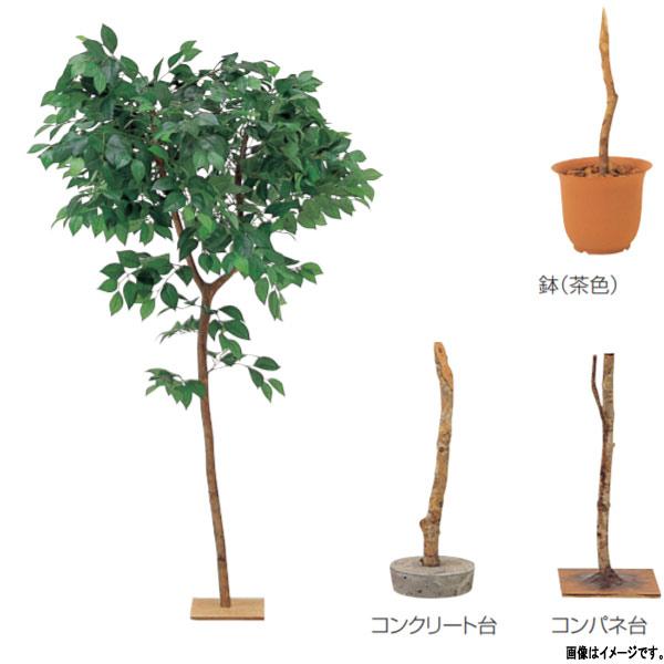 グローベン 人工植物 樹木・屋内用 ツバキ(花なし) A70NT158 H1800mm