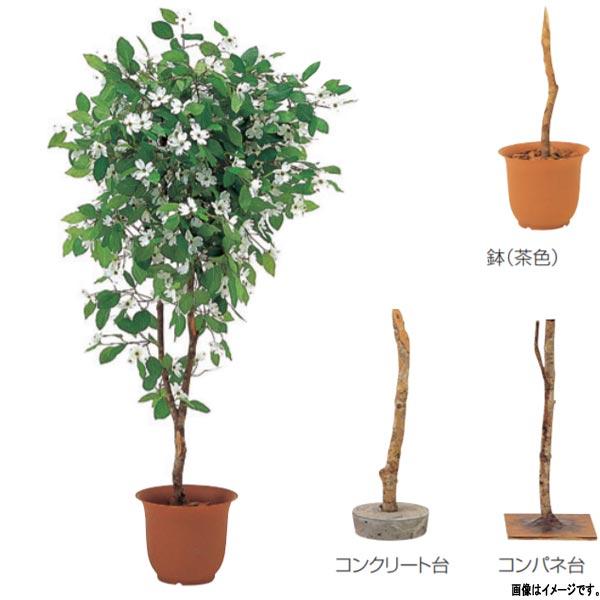 グローベン 人工植物 樹木・屋内用 花水木 A70NT165 H1500mm