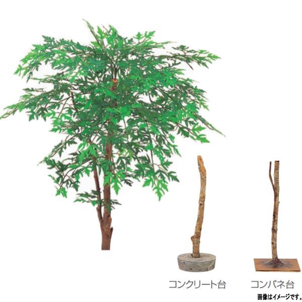 グローベン 人工植物 樹木・屋内用 アラリア A70NT286 H600mm