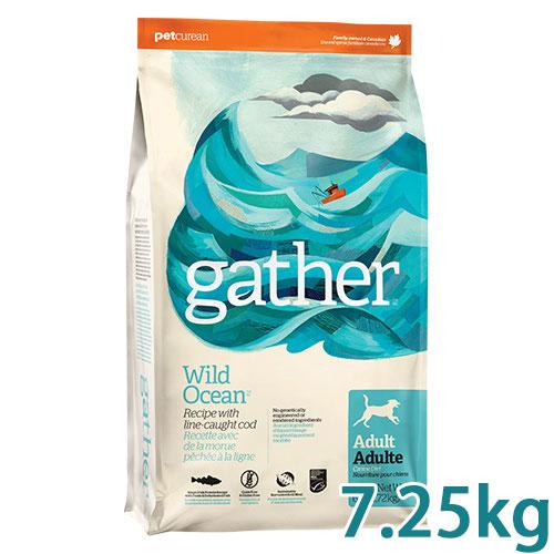 GATHER(ギャザー) ワイルドオーシャン 7.25kg