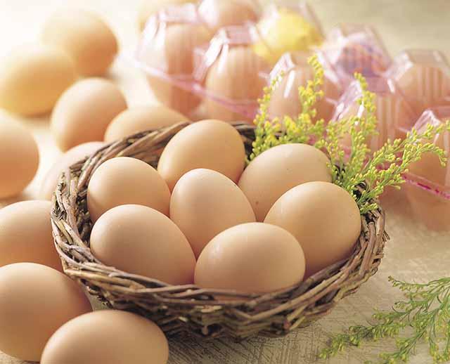 日本第一的精选的蛋