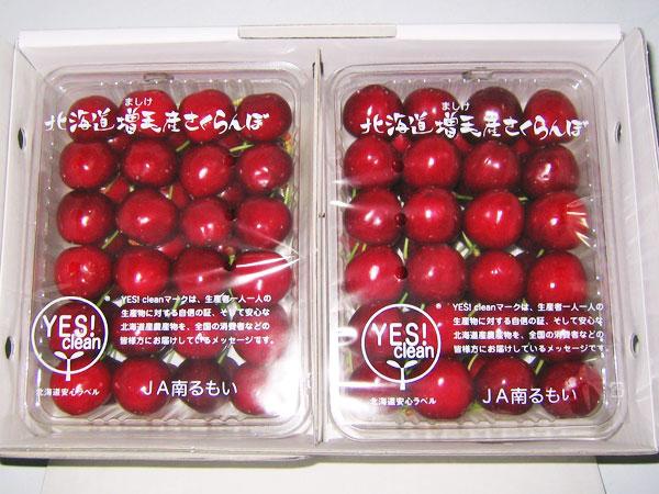 さくらんぼ サミット(2L) 2kg(500g×4)送料無料 北海道増毛産サクランボYES!clean(減農薬・減化学肥料)生産元直送 出荷期間:7月下旬