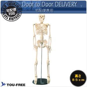 【人体模型】骨格模型 高さ85Cmの省スペースタイプ!【smtb-s】