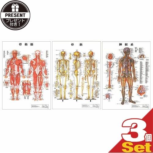 【さらに選べるプレゼント付き】【検査】医道の日本社 人体解剖学チャート ポスター 選べる3枚セット パネルなし