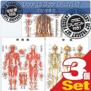 【さらに選べるプレゼント付き】【検査】医道の日本社 人体解剖学チャート骨格筋 ポスター 3枚セット(骨格筋・骨格・神経図) パネルなし【smtb-s】