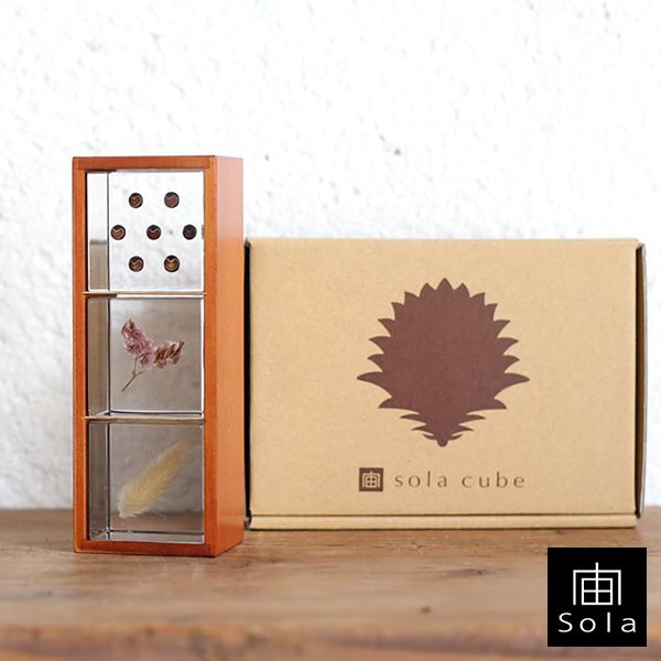 【送料無料】宙-sola- ソラ 3個セット(木箱付き) Aセット フウセンカズラ・サマーチェリー・ウサギノオ