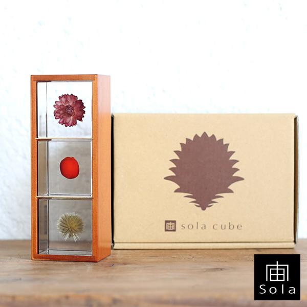【送料無料】宙-sola- ソラ 3個セット(木箱付き) Bセット カイガラソウ・ワイルーロ・ルリタマアザミ