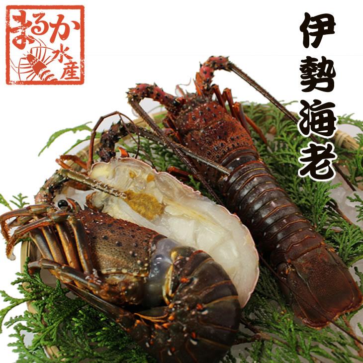送料無料 伊勢海老 活〆冷凍 大きめサイズ 1kg 3尾入  [伊勢海老] (活〆冷凍)