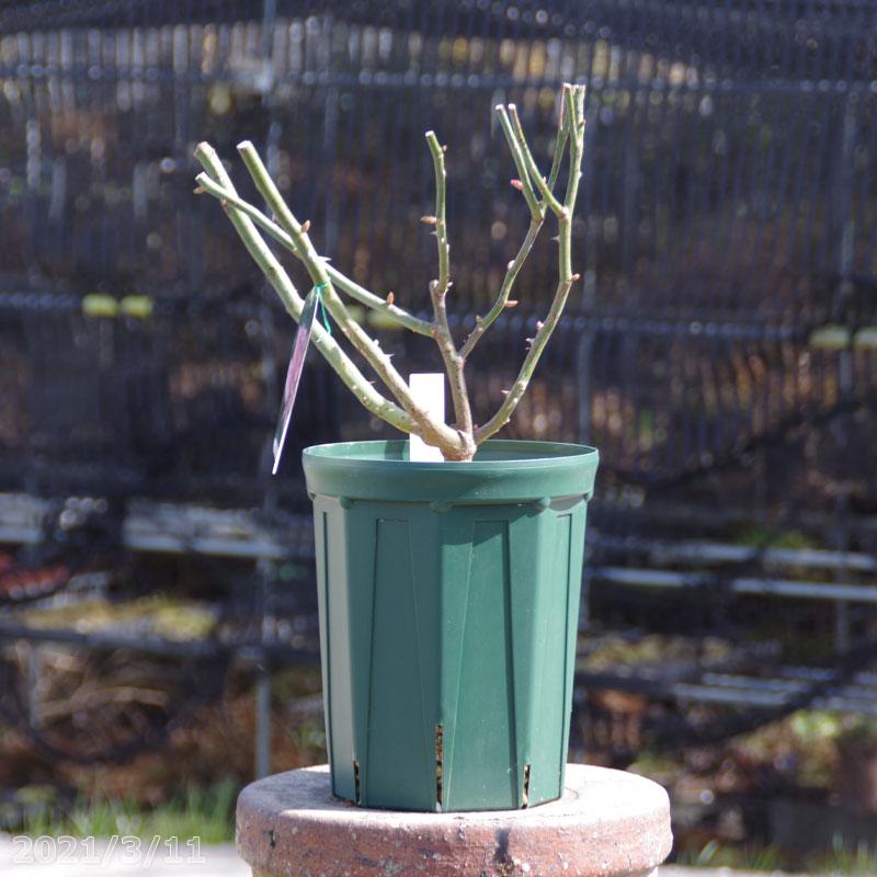水はけが良く育ちの良い スリット鉢 7号 21cm ロング お得 1個 CSM 210L モスグリーン クリスマスローズ 樹木 植木鉢 果樹 プラスチック鉢 バラ 花木 プラ鉢 即出荷 宿根草