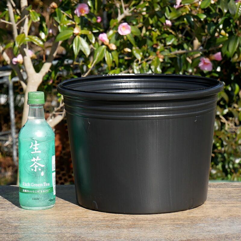 茶碗蓮に最適 持ち手つき 限定モデル 茶碗蓮簡易浅ビニールポット 10号浅 30cm 底穴無 水生植物 茶碗蓮 供え スイレン
