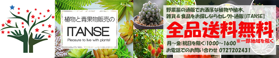 植物販売のITANSE楽天市場店:野菜苗や果樹苗、食品のセレクト通販ITANSE!!自社農場から新鮮直送!!