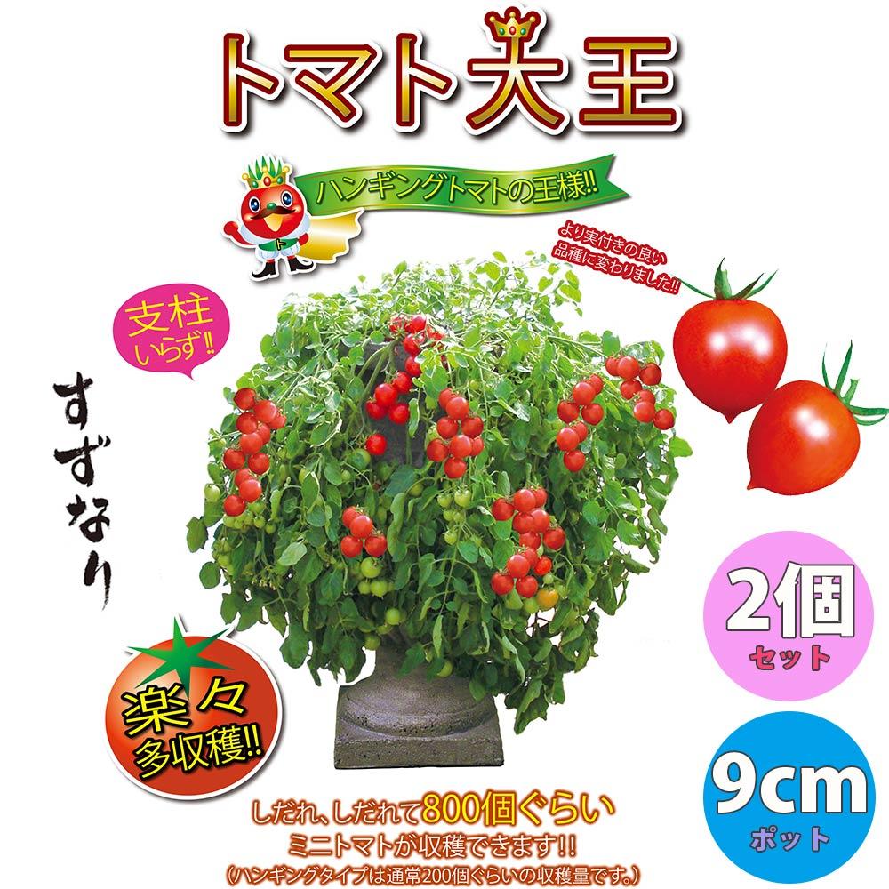 方 夏 野菜 育て 家庭菜園で栽培できる夏野菜7選!育て方のコツやおすすめの種類は?