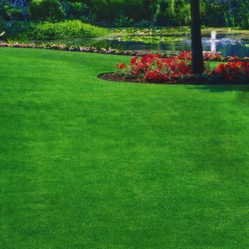 やわらかな緑色の美しい芝 耐寒性の強い品種 メーカー再生品 種子 ケンタッキーブルーグラス 卸売り 4dlトーホクのタネ 西洋芝