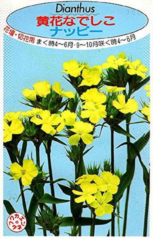 クリアな黄色が美しい 売買 育てやすい撫子 種子 黄花なでしこ ナッピー 福花園種苗のタネ 返品送料無料