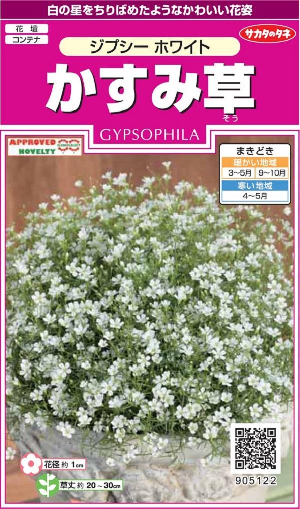 安値 白の星をちりばめたようなかわいい花姿 種子 かすみ草 ジプシーホワイト 10%OFF サカタのタネ
