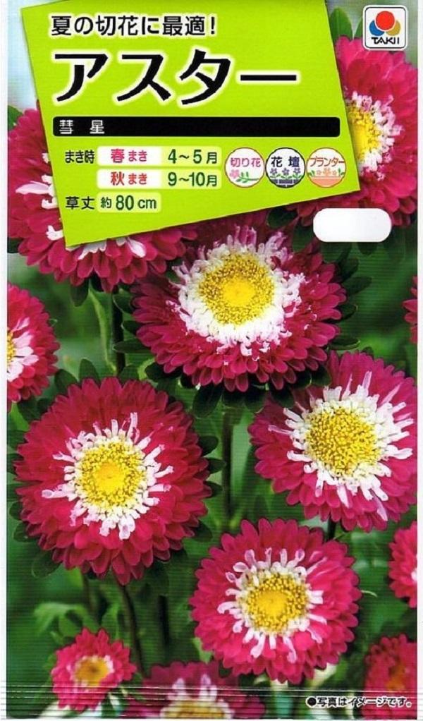 与え 夏の切花に最適 お気にいる 種子 アスター タキイ種苗のタネ 彗星