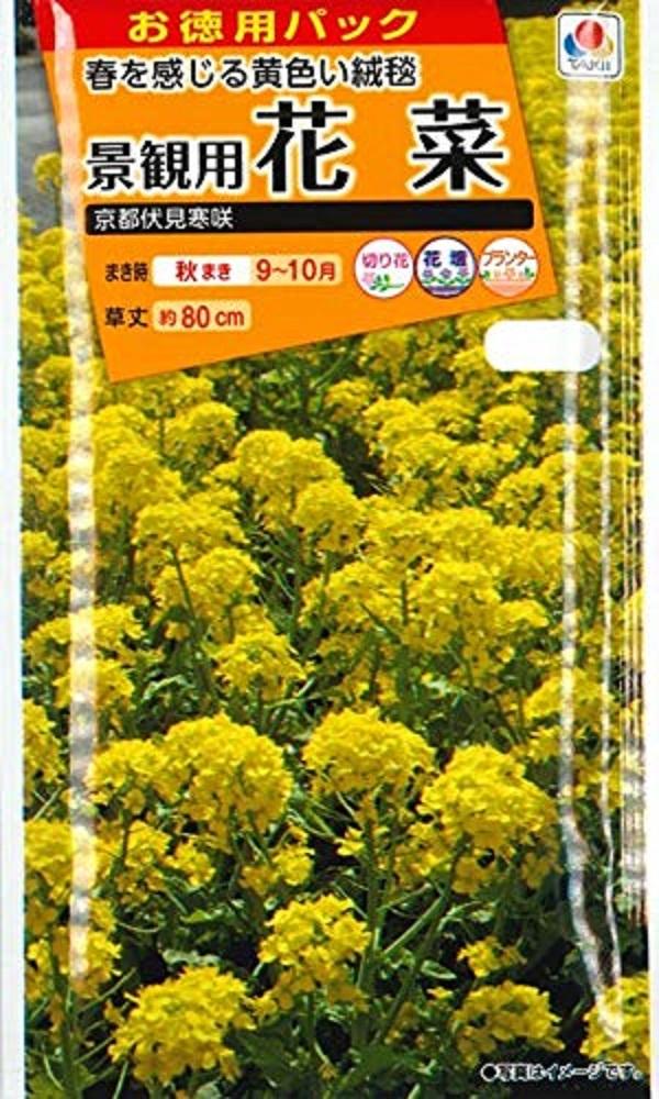 春に一面の菜の花畑を楽しめます たくさんまけるお徳用大パック 種子 景観用 タキイ種苗のタネ 京都伏見寒咲 花菜 ストアー 人気海外一番