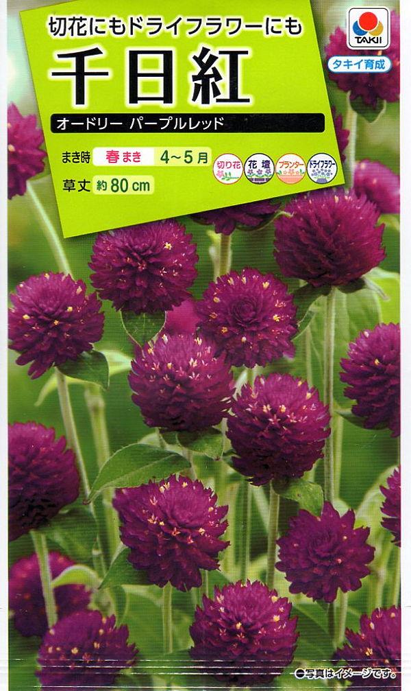 【種子】<BR>千日紅 オードリーパープルレッドタキイ種苗のタネ