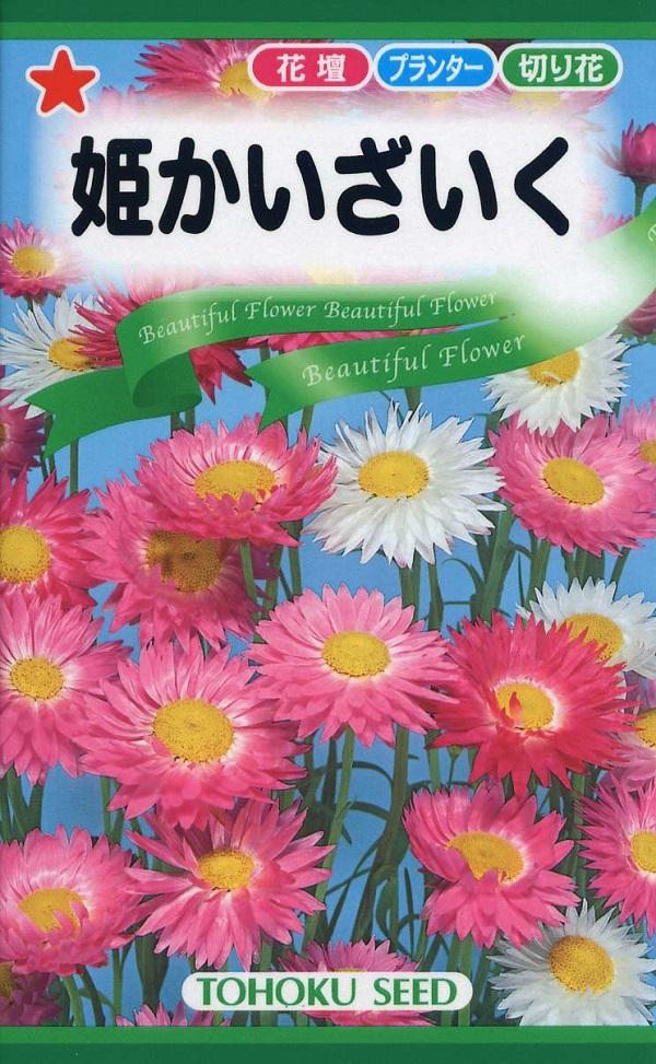 花かんざしとも呼ばれるドライフラワーにも向く花 種子 トーホクのタネ 姫かいざいく 誕生日プレゼント 高額売筋