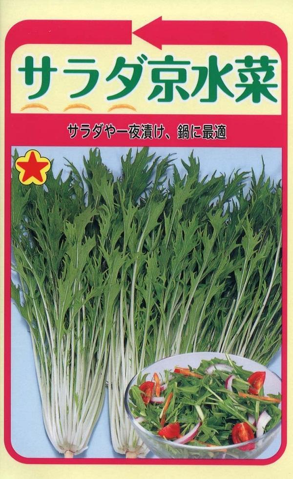 日本産 買物 プランター栽培も可能 種子 サラダ京水菜トーホクのタネ