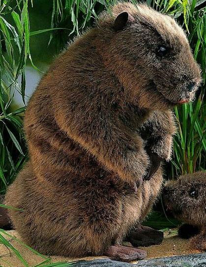 """ビーバー(大) KOSEN(ケーセン社) 34cm """"Elli"""" Beaver/ぬいぐるみ プレゼント/リアル/動物/ギフト/子供/女の子/男の子/大人/クリスマス"""