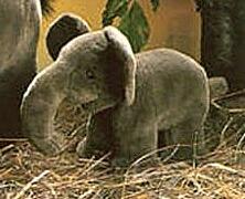 ケーセン ぬいぐるみ kosen 小象 ぞう ゾウ mini elephant 25cm リアル 動物