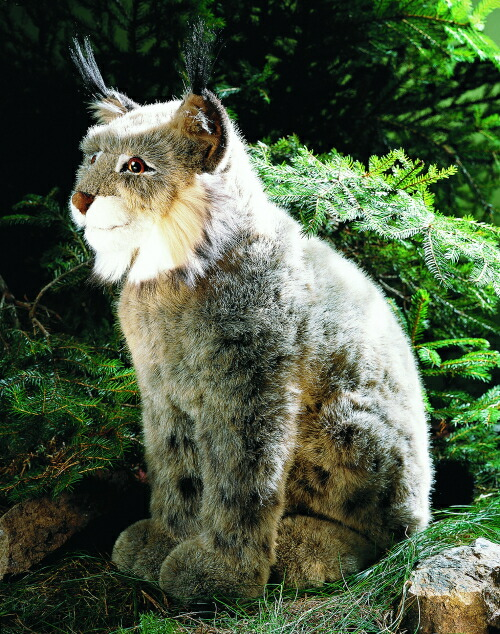 ケーセン ぬいぐるみ kosen オオヤマネコ 座り 43cm Lynx リアル 動物