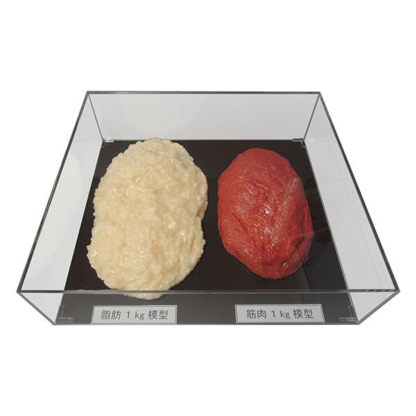 【送料無料】脂肪/筋肉対比セット(アクリルケース入)1kg IP-982【生活雑貨館】