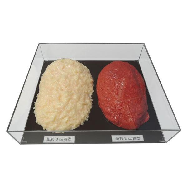 【キャッシュレス5%還元】【送料無料】脂肪/筋肉対比セット(アクリルケース入)3kg IP-984【生活雑貨館】