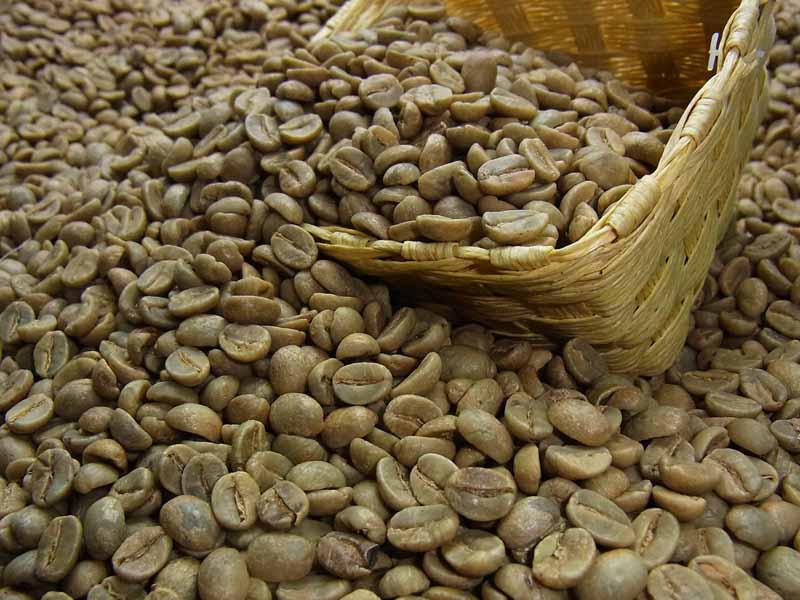 生豆コーヒーエクアドル グレートマウンテン (5kg入) :【HLS_DU】
